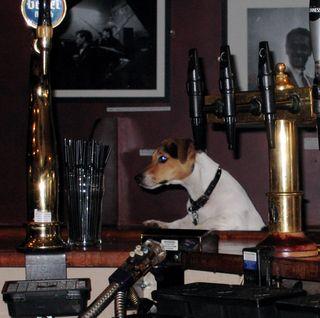 Dog pub