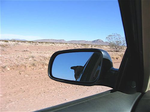 Desertdrive dog in rearview