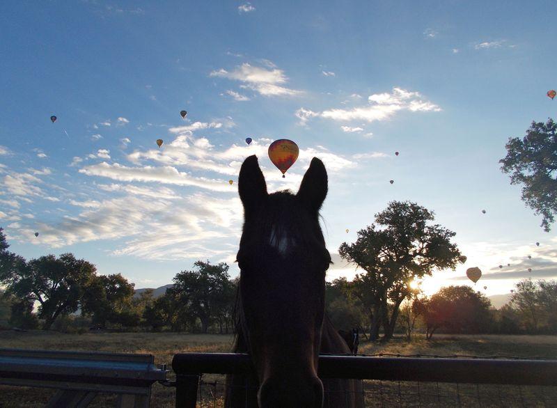 Weedranch balloonhead