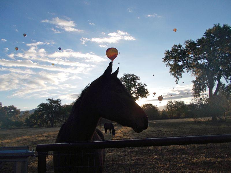 Weedranch balloon morning 2013