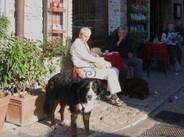 Assisis_dog