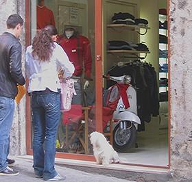 Shop_dog