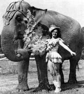 Circus_elephant_2