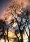 Cottonwoods_1