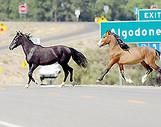 San_felipe_horses